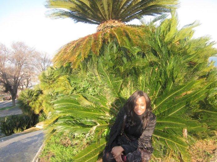 Flashback Barcelona peacock palm